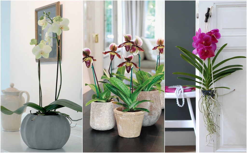 3 Best Places to Put an Orchid in Your House  - Orchid Girl and Plants