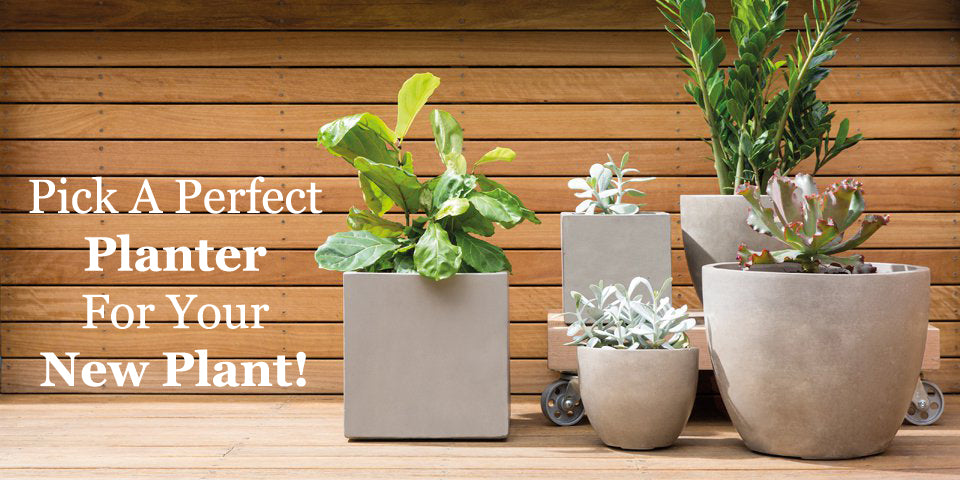 Pick A Perfect Planter For Your New Plant - Orchid Girl and Plants
