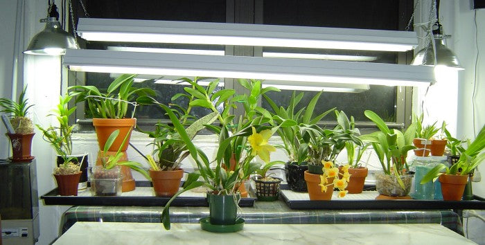 inside garden ideas, orchids flower, indoor plants