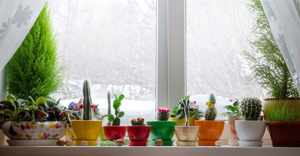 Care tips for plant during winter