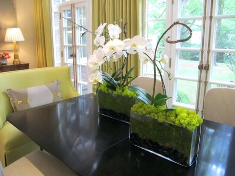 3 Best Places to Put an Orchid in Your House | Orchid Girls