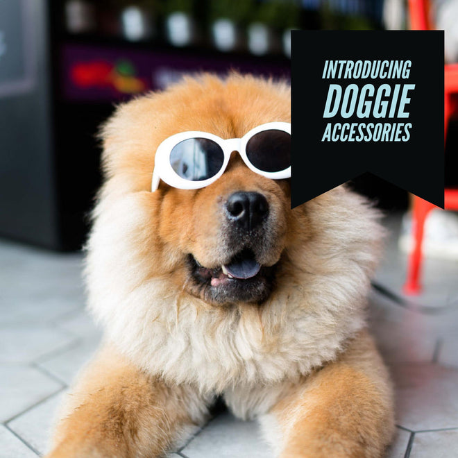 Funky Dog Accessories