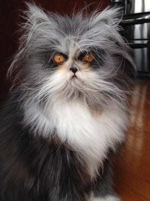 13 Cats That Hate Mondays  More Than You Do