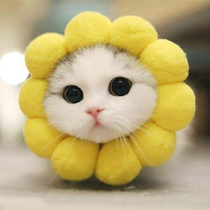 Sunflower | Cat Costume