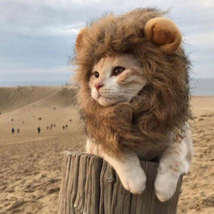 Lion Mane | Cat Costume