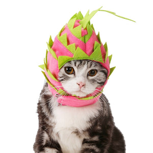 Dragon Fruit Hat | Cat Costume