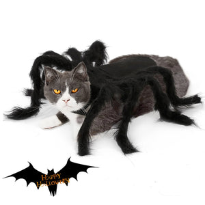 Spider | Cat Costume