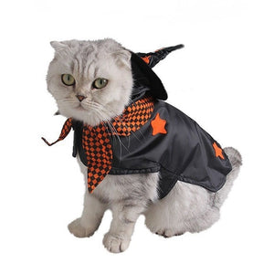 Little Witch | Cat Costume