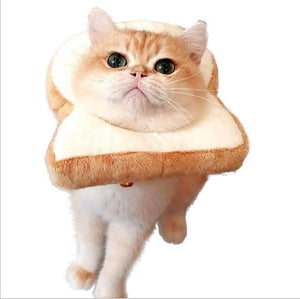 Cat Breading | Cat Costume