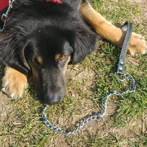 Metal Chain Leash With Leather Handle