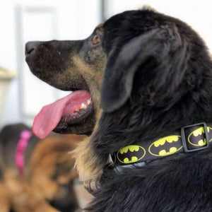 Rubio Rules | Batman Collar | Dog Supplies