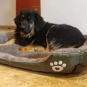 Bed With Paw Print - Beds