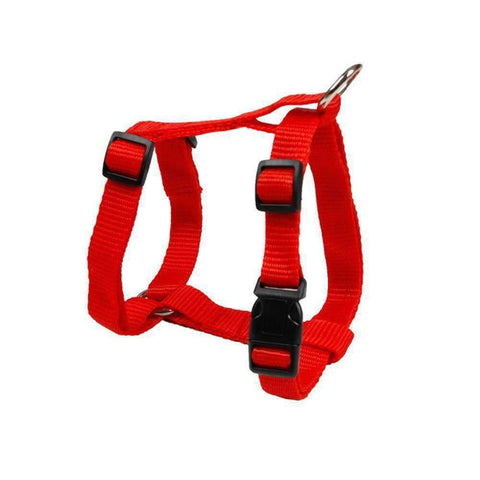 Rubio Rules | Halter Harness | Dog Supplies