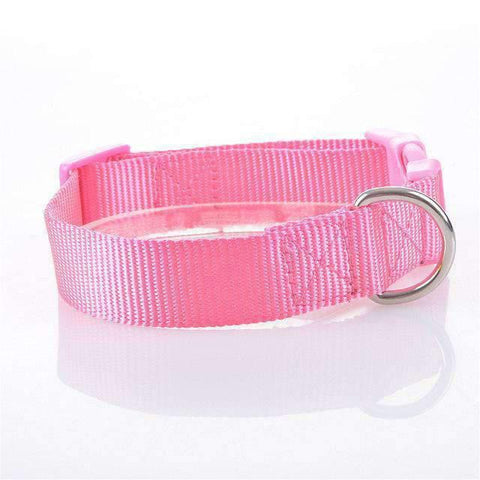 Rubio Rules | Summer Edition Adjustable Nylon Collar | Dog Supplies