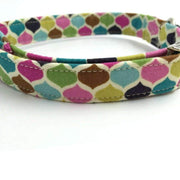 Rubio Rules | Color Drops Collar | Dog Supplies