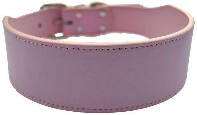 Rubio Rules | Wide Leather Collar | Dog Supplies