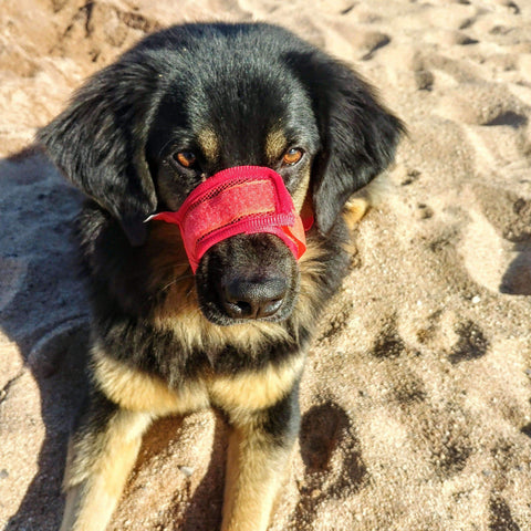 Rubio Rules | Velcro Muzzle | Dog Supplies