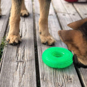 Rubio Rules | Rubber Ring | Dog Supplies