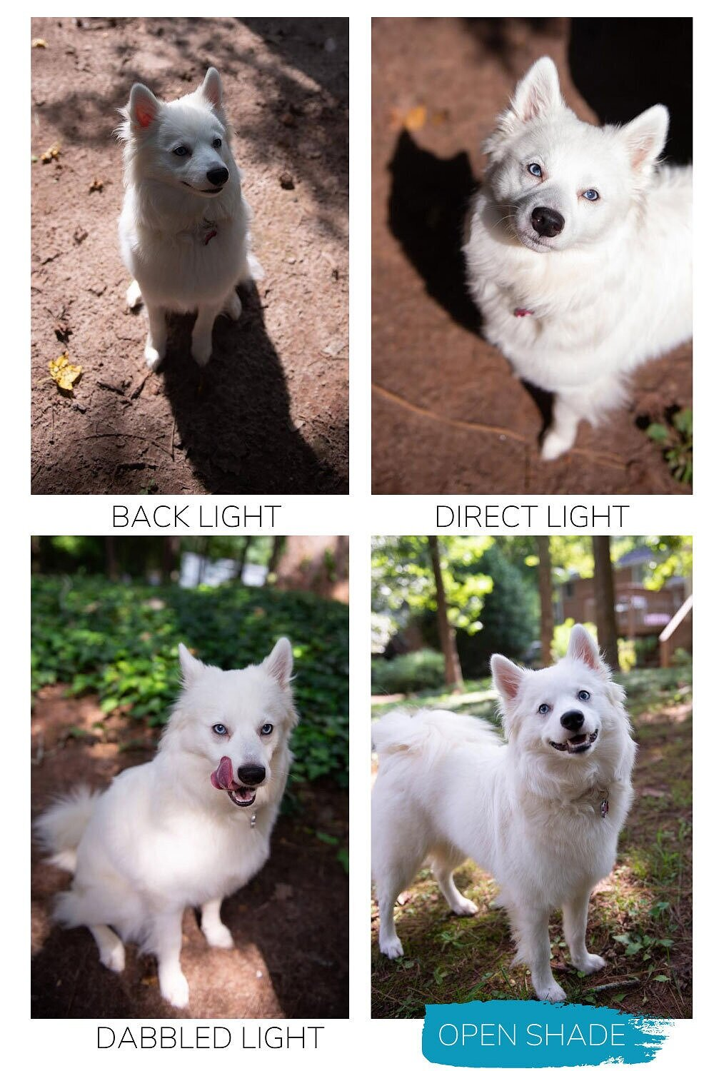 How to Easily Photography Your Dog in a Simple Dog Photoshoot — lighting