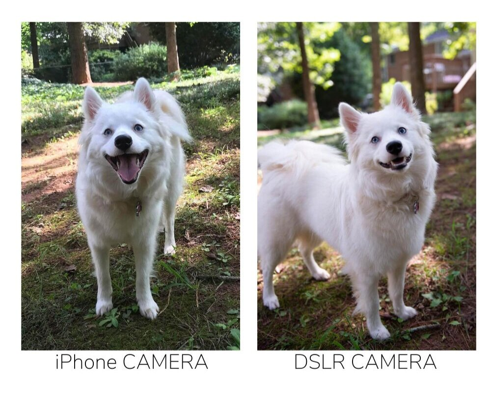How to Easily Photography Your Dog in a Simple Dog Photoshoot iPhone vs DSLR Camera