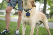 [Buy Best Pet Tag Silencers Online] - Fido Pet Tag Silencers