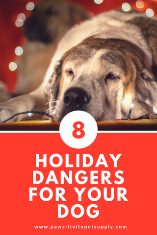 Holiday safety tips dogs and a dog safety articles and dog health tips