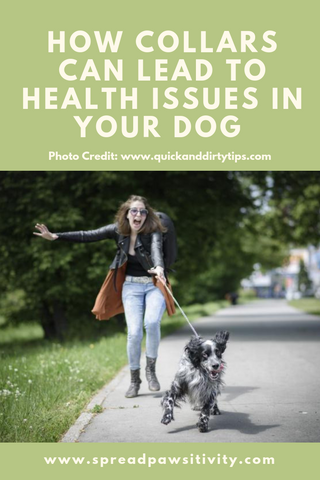 Dog Health Tips and Dog Health Warnings on Dog Collars and Leashes