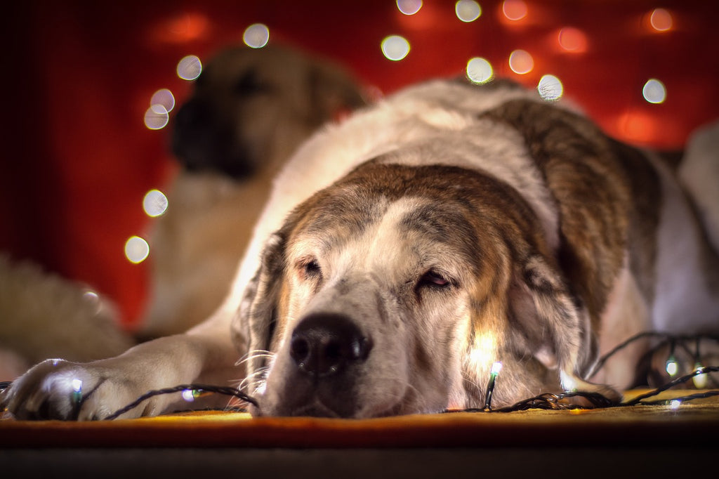 Christmas Holiday Dog Safety Tips