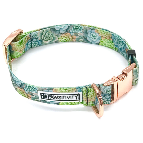 Green Succulents Collar