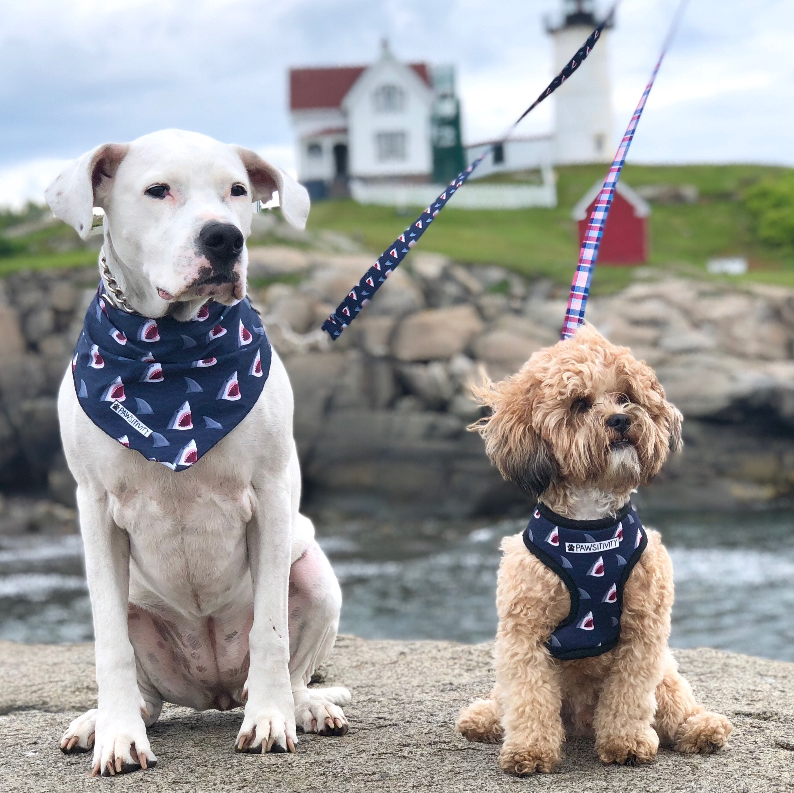 Pawsitivity Reversible Harness - Shark Bite & Madras Plaid