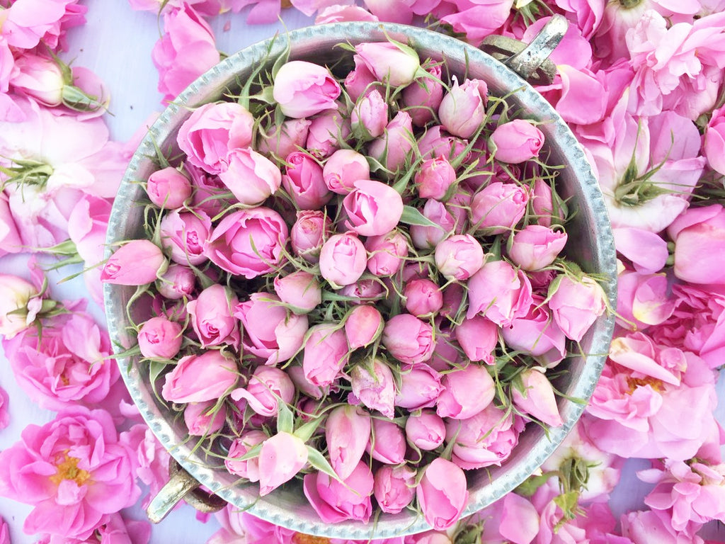 All You Need to Know about Rose Bud Tea
