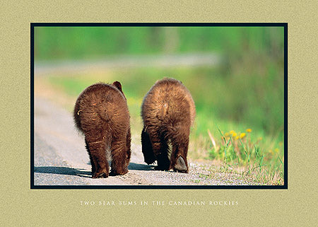 Two Bear Bums in the Canadian Rockies