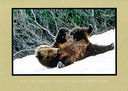 Belly Rub, Anyone?  A Grizzly Lounges on Spring Snow