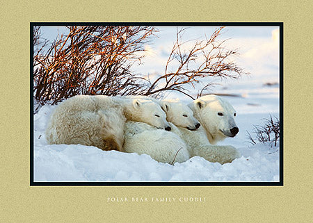 Polar Bear Family Cuddle