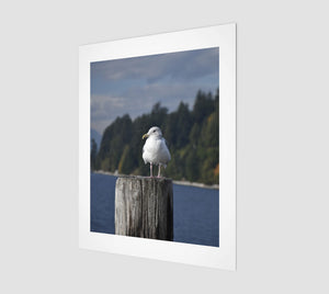 Gulls Post 11x14 Fine Art Print from Engrooved Splash Productions located in British Columbia, Canada.