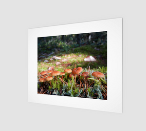 Mushroom Forest 8x10 Art Print from Engrooved Splash Productions