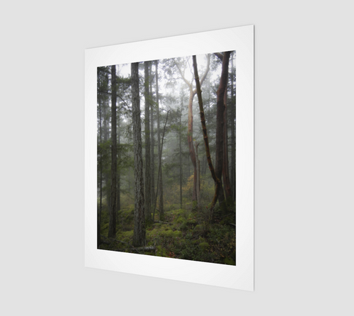 Misty Morning 11x14 Art Print from Engrooved Splash Productions
