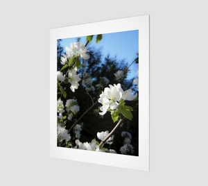 Spring Flowers 11x14 Fine Art Print from Engrooved Splash Productions located in British Columbia, Canada.
