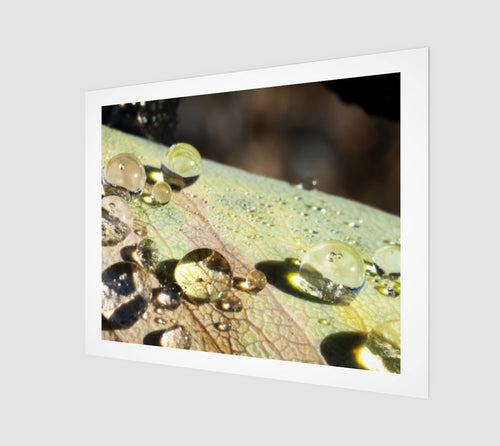 Dew on the Leaf 16x20 Art Print from Engrooved Splash Productions located in British Columbia, Canada.