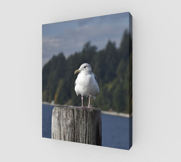 Gulls Post 11x14 Canvas Print from Engrooved Splash Productions located in British Columbia, Canada.