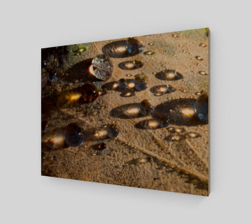Morning Dew 11x14 Wood Print from Engrooved Splash Productions located in British Columbia, Canada.
