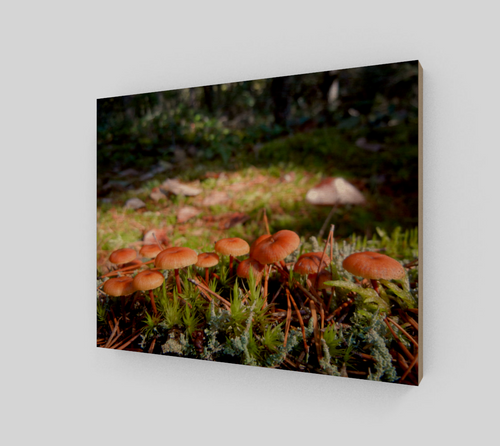 Mushroom Forest 8x10 Wood Print from Engrooved Splash Productions