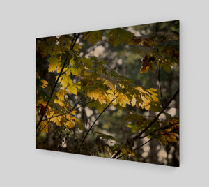 Fall Maple 16x20 Wood Print from Engrooved Splash Productions located in British Columbia, Canada.