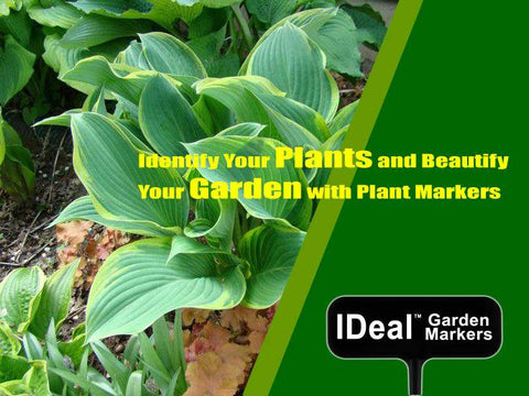 Identity your plants and beautify your garden with plant markers
