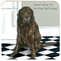 Chocolate Labrador Coaster - Fridge Stray