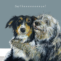 Collies Greeting Card – Say Cheese