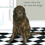 Chocolate Labrador Greeting Card – Fridge Stray