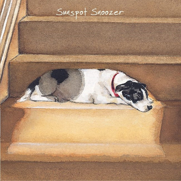 Jack Russell Staffie X Greeting Card – Sunspot Snoozer