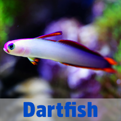 Into the Blue - Dartfish