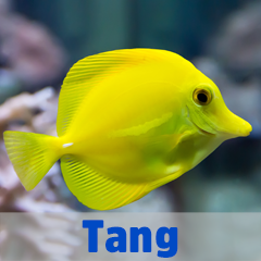 Into the Blue - Tang